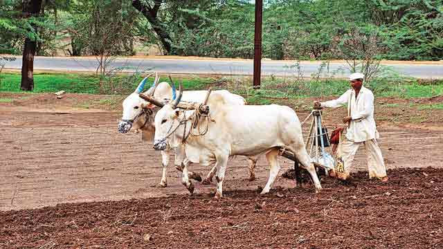 indian_farmer_village