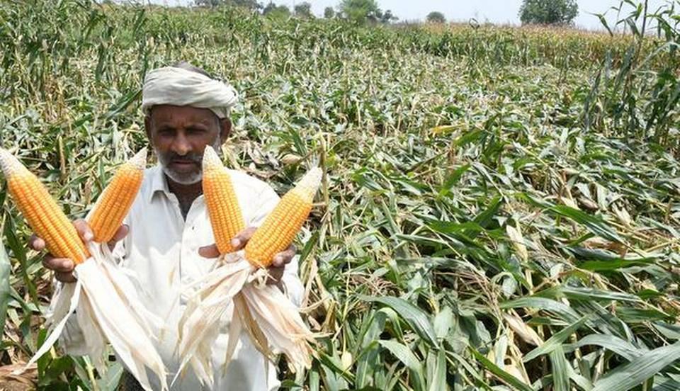 crop insurance india