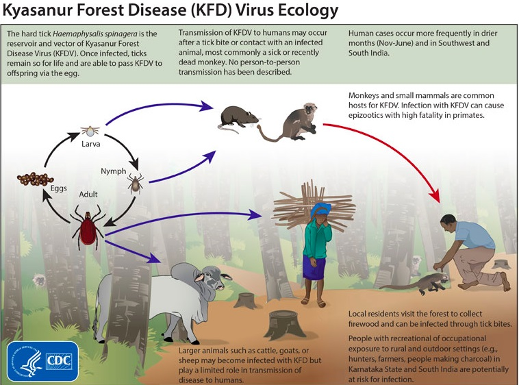 Kyasanur-Forest-Disease kdf virus