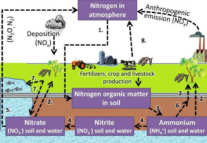 nitrogen_pollution