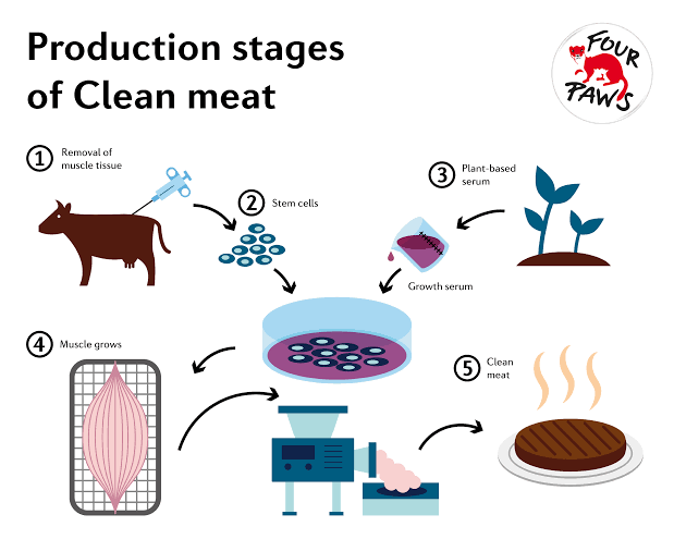 DBT-funds-research-to-'cultivate'-meat-in-lab