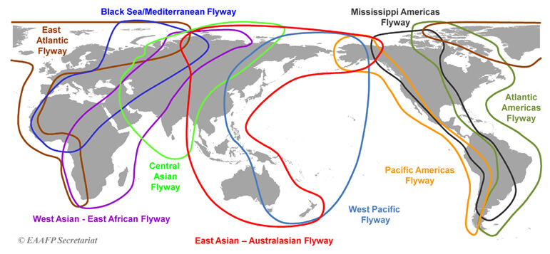 bird_migration_flyway_map