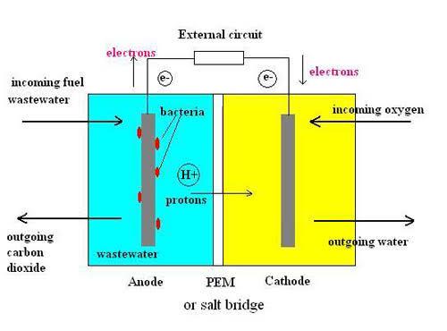 salt-bridge