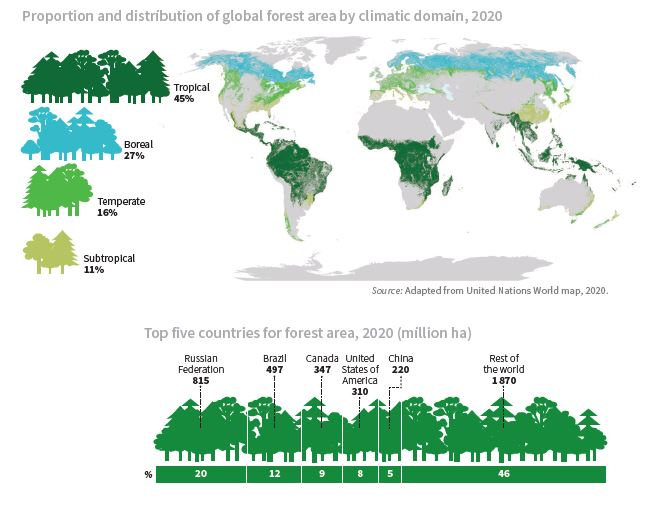 Global Forest Resources Assessment, 2020
