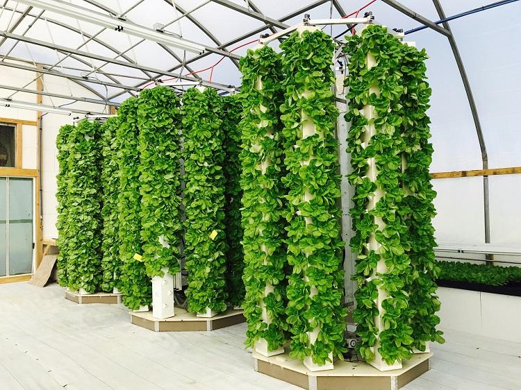 aeroponics agriculture